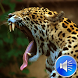 Jaguar Sounds Ringtones by msd developer multimedia
