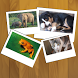 Pix - Animals game for kids