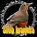SABIA LARANJEIRA CANTO PIEDADE SENHOR by Raja Burung App