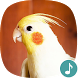 Appp.io - Cockatiel Sounds by Appp.io