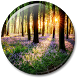 Forest Live Wallpaper by Frisky Lab