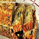 Tasty Ketogenic Diet Recipes by Best Devo