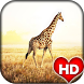 Giraffe Animal Wallpaper HD by Ash Tech Apps