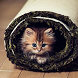 Cute Animals HD Wallpapers by Purple Berry