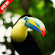 Toucan Wallpaper by ImperialApps