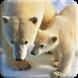 Polar Bears LWP