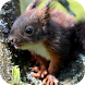 Squirrel Video Wallpaper by ComfyDj