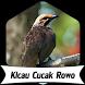 Suara Burung Cucak Rowo +1000 Kicau by Terkicaulah