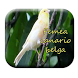 femea canario belga by M Zakia Randi 354 Apps