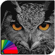 Theme - Night Owl by Theo Room Studio