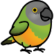 Pistachio Pet by boody apps