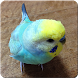 Budgerigar Sounds for Parakeet by Barbecue Army
