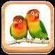 Masteran Kicau Lovebird by BLACKSWAN