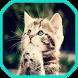 Cats Wallpapers by androidaplicacionesbuenas