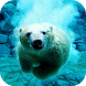 Polar Bear Swims Video LWP by ComfyDj