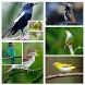 Kicau Masteran Burung Lengkap by Songbird Apps