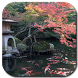 Koi Pond Video Live Wallpaper by Hubert Apps