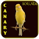 Canary Bird Singing by Apps Dev Inc
