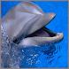 Звуки дельфина