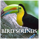 Cool Birds Sounds by Playstore Sounds Inc