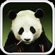 Panda Bear Live Wallpaper HD by Cicmilic Soft