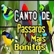 100++ Canto de Passaros Mais Bonitos by Tongat Worship Dev