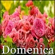 Domenica by Roten Apps