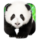 Talking Pandas 3D Live WP by BusaccaBuskin