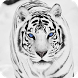 White Tiger Live Wallpaper by DreamWallpapers