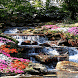 Flowers River Live Wallpaper by Daksh Apps