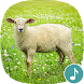 Appp.io - Sheep sounds by Appp.io