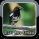 Kicau Anis Kembang Ngekek Panjang by The Best App Inc