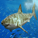 Sharks of the World by Appa Apps