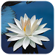 Lotus Live Wallpaper by Amazing Live Wallpaperss