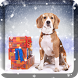 Animal Snow Live Wallpaper by Live Wallpaper PRO