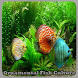 Ornamental Fish Culture by dipdroid