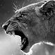 lion live wallpaper by solar trap studio