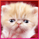 Cat HD Wallpaper by Andrian G