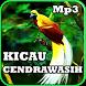 Kicau Cendrawasih Gacor Mp3 by iky94 studio