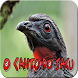 O Canto do Jacu by Raja Burung App