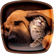 Cats and Dogs Live Wallpaper by Cute Live Wallpapers And Backgrounds