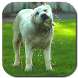 Funny Dog Video Live Wallpaper by Hubert Apps