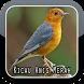 Anis Merah Ngekek Panjang Juara by The Best App Inc