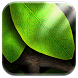 Tap Leaves Free Live Wallpaper by Kision Lab