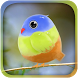 Cute Bird Live Wallpaper by Yan Xiaoning