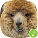 Appp.io - Alpaca Sounds by Appp.io
