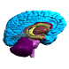 Brain VR
