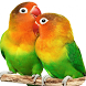 Parrot HD Wallpapers by Holiday Wallpaper