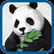 Beautiful Panda Pics