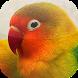 Kicau Burung Lovebird by KicauApp